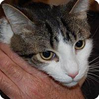 Adopt A Pet :: Zeke - Naperville, IL