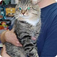 Adopt A Pet :: Viktor - Brooklyn, NY
