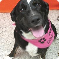 Adopt A Pet :: Katie Sue - Conroe, TX