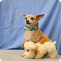 Adopt A Pet :: DEXTER - Poteau, OK