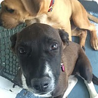 Adopt A Pet :: Britain - San Francisco, CA