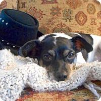 Adopt A Pet :: Jocko (AZ) - Mesa, AZ