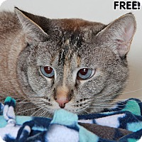 Adopt A Pet :: Neera - Walnut Creek, CA