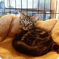 Adopt A Pet :: Minxy - Marietta, GA