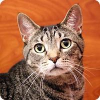 Adopt A Pet :: Buddy - Dallas, TX