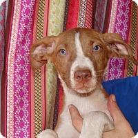 Adopt A Pet :: Kay - Oviedo, FL