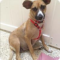 Adopt A Pet :: Calista - Thousand Oaks, CA