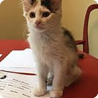 Adopt A Pet :: Artemis - Wilmington, NC
