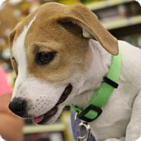 Adopt A Pet :: Destiny - Lakeville, MN