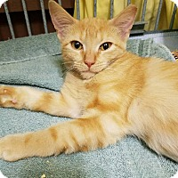Adopt A Pet :: Candy - Maryville, TN