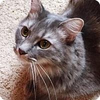 Adopt A Pet :: Fitzgerald - Duluth, GA