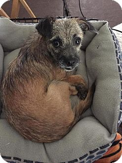 Terrier (Unknown Type, Medium) Mix Dog for adoption in Sacramento, California - Rocco