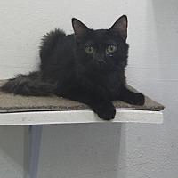 Adopt A Pet :: Tab - Phoenix, AZ