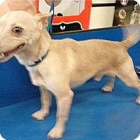 Adopt A Pet :: Butters - Summerville, SC
