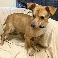 Adopt A Pet :: Mork - Phoenix, AZ