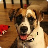 Adopt A Pet :: Sadie - Doylestown, PA