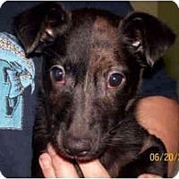 Adopt A Pet :: Marley - Kingwood, TX