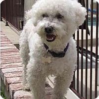 Adopt A Pet :: Leonardo - La Costa, CA