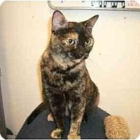 Adopt A Pet :: Calamity - Scottsdale, AZ
