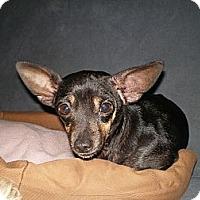 Adopt A Pet :: Idgee - Apex, NC