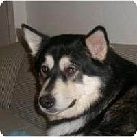 Adopt A Pet :: Fiyero--Adopted! - Belleville, MI