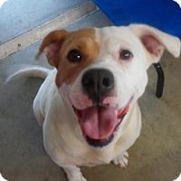 Adopt A Pet :: Stella - Williston, FL