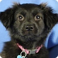 Adopt A Pet :: Tori - Minneapolis, MN
