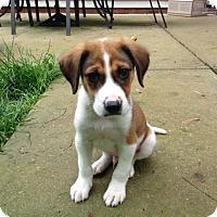 Adopt A Pet :: Copper - Charlestown, RI