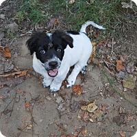 Adopt A Pet :: Opie - Byhalia, MS