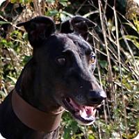 Adopt A Pet :: KC's Amy - Douglasville, GA