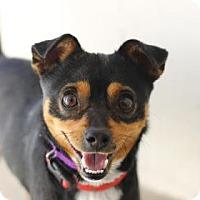Adopt A Pet :: GAGE - Kyle, TX