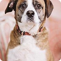 Adopt A Pet :: Cobblepot - Portland, OR