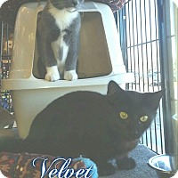 Adopt A Pet :: Fiona & Velvet - Turnersville, NJ