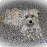 Adopt A Pet :: JEANIE - Carrollton, TX