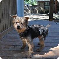 Adopt A Pet :: Quintin - Lafayette, LA