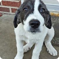 Adopt A Pet :: Rio  *Adopted - Tulsa, OK