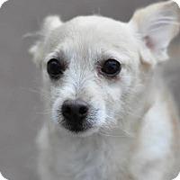 Terrier (Unknown Type, Medium) Mix Dog for adoption in Alpharetta, Georgia - Guido
