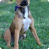 Adopt A Pet :: Shelley - Waldorf, MD