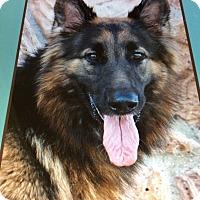 Adopt A Pet :: GABRIELA (ONYX) VON ROTH - Los Angeles, CA