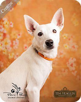 Terrier (Unknown Type, Small) Mix Dog for adoption in Ottawa, Kansas - Creame