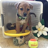 Adopt A Pet :: Clover - Albertville, MN