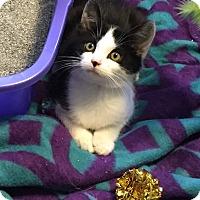 Adopt A Pet :: Chloe - Prospect, CT