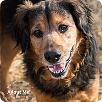 Adopt A Pet :: Rhett Dog - Westminster, MD