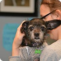 Adopt A Pet :: Chuckie - Lafayette, IN