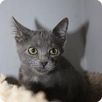 Adopt A Pet :: Misty - Louisville, KY