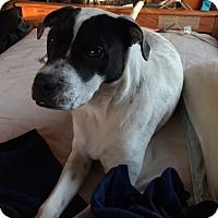 Adopt A Pet :: Zoi - Minneapolis, MN