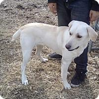 Adopt A Pet :: Pearl - Trenton, NJ