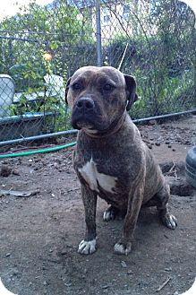 Pepper | Adopted Dog |...