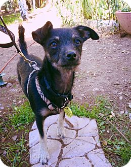 Terrier (Unknown Type, Small) Mix Dog for adoption in Phoenix, Arizona - Wayne