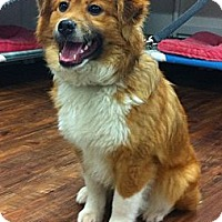 Adopt A Pet :: DUKE~ADOPTED! - North Vancouver, BC